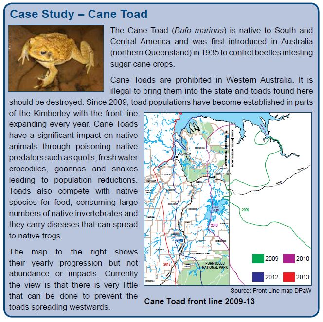Case Study – Cane Toad