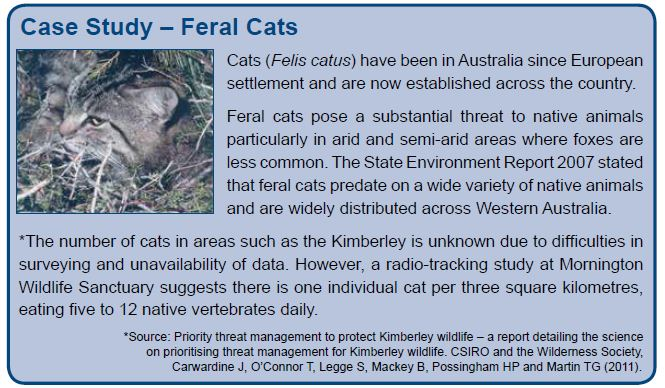 Case Study – Feral Cats