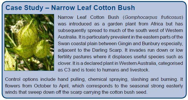 Case Study – Narrow Leaf Cotton Bush