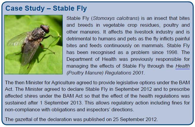 Case Study – Stable Fly