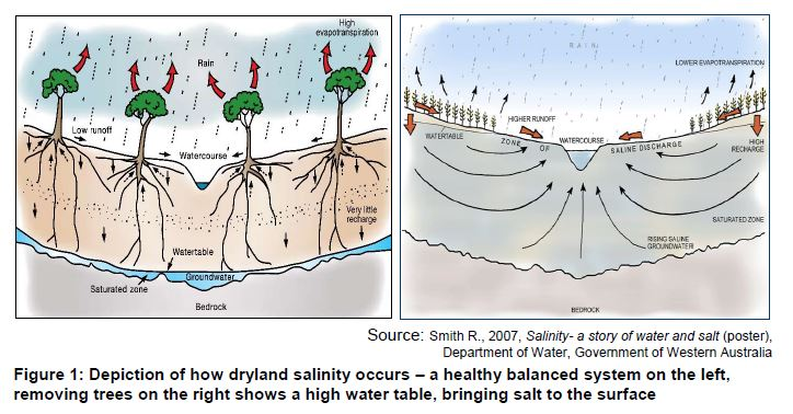 Figure 1 - Depiction of how dryland salinty occurs